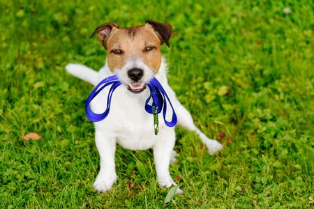 Hond die leiband in de mond houdt en wacht op lopen