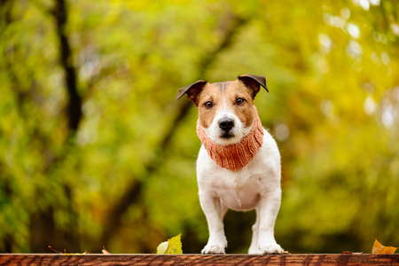 Dog at fall (autumn) park with lush foliage background