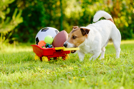 Sportive dog fetches collection of balls and toys in cart