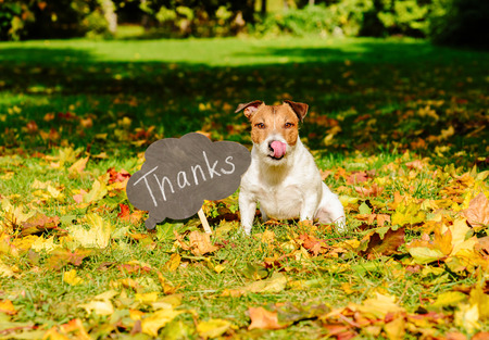 Thanksgiving concept with dog on fall leaves and plate with thanks word on it