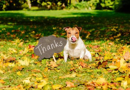 """Thanksgiving-Konzept mit Hund auf Herbstblätter und Platte mit """"Danke"""" Wort drauf"""