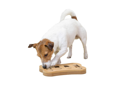 Hond snuiven opleiding met slim stuk speelgoed dat op witte achtergrond wordt geïsoleerd
