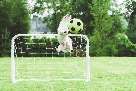 Comic dog catching football (soccer) 写真素材