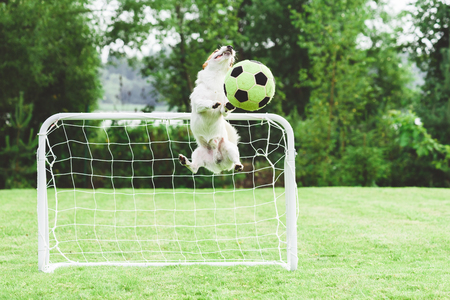 Comic dog catching football (soccer) Stock fotó