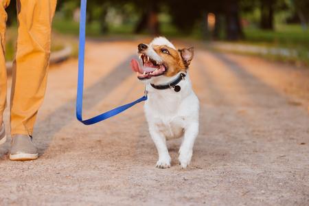 Kindly dog on leash looking at at walking at park