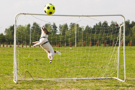 Football (soccer) ball hits crossbar while funny keeper jumping to save goal