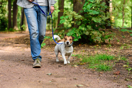 Man and dog on loose leash hiking at a forest by footpath 免版税图像
