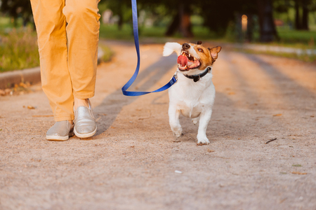 Happy dog walking on leash with woman at evening park during sunset