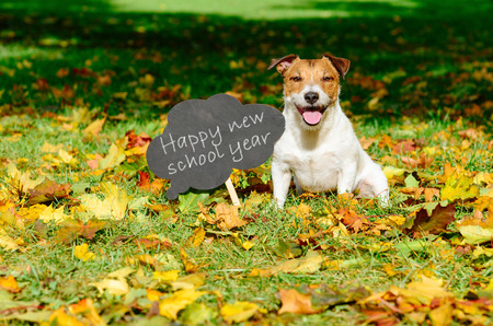 Back to school concept with happy dog and greeting on blackboard Foto de archivo