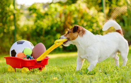 Concept of fun summer activities with dog and many sport balls Stockfoto