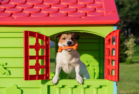 Happy dog in doghouse holding toy bone in mouth