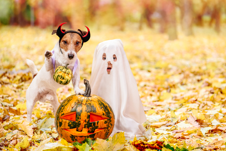 Kid and dog dressed in Halloween costumes with Jack olantern pumpkins