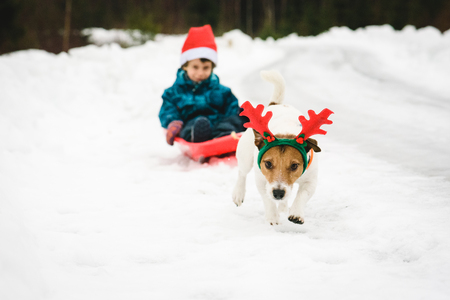 Funny dog with Rudolph reindeer's antlers pulls sled with Santa Claus Stock Photo