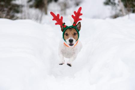 Dog wearing antlers of Christmas reindeer plays in deep snow Stock Photo