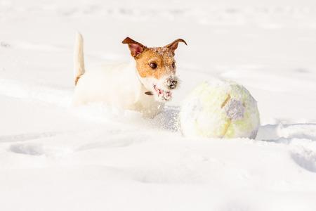 Cute Dog Running Chasing Football Soccer Ball In Deep Snow Stock