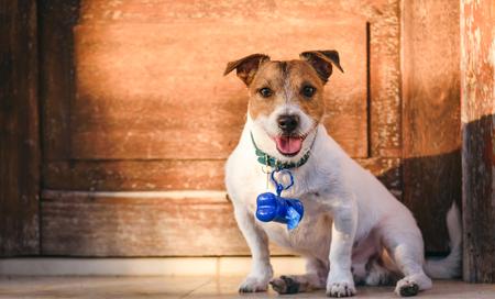 Hund mit Behälter für Hundekotbeutel am Halsband