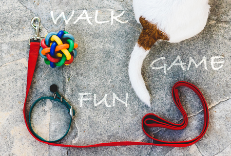 Dog tail and doggies accessories for a walk