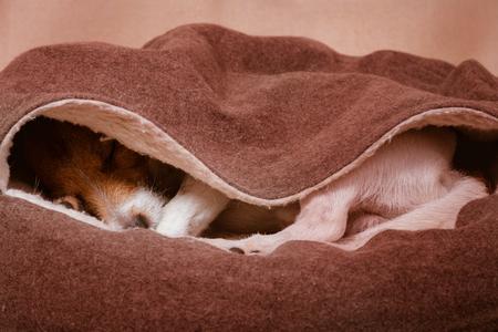 Cute domestic dog sleeps inside cozy hooded pet bed