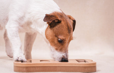 Dog playing sniffing puzzle game for nosework training