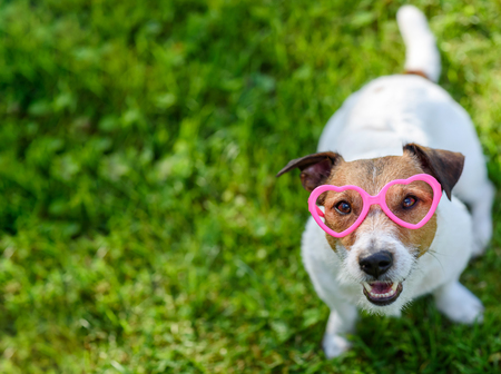 dog with heart shaped glasses looking up into camera