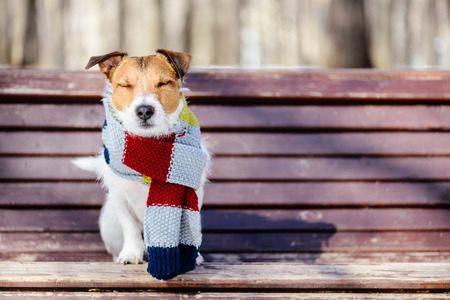 Hygge concept with dog wearing scarf Reklamní fotografie