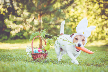 Happy dog holding large carrot in mouth