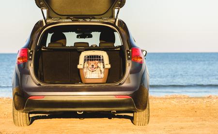 Gelukkige hond in auto op strand