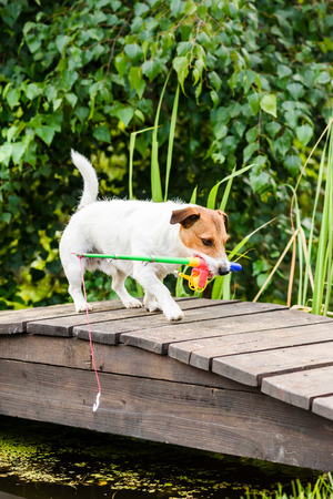 Dog as funny angler fetches toy fishing rod