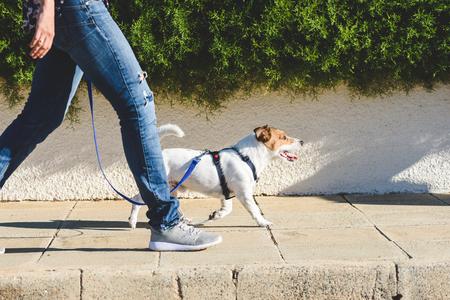 Dog walker che cammina sul marciapiede della strada