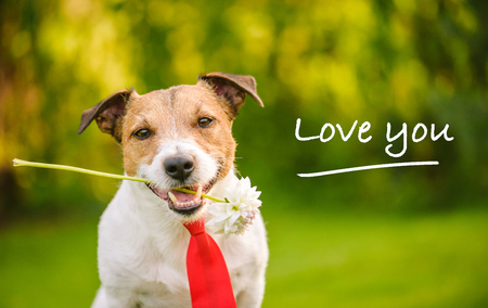 Lovely dog with flower and red tie. saying