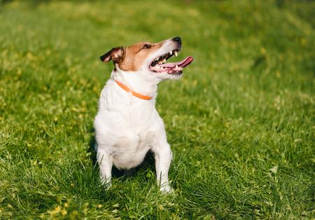 Happy dog wearing anti flea and tick collar