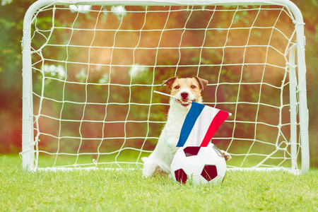 Dutch national team fan