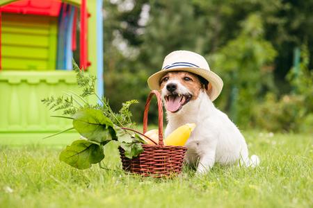 Dog with basket of vegetables