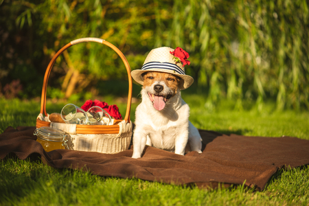Domestic dog at picnic at sunny summer day 写真素材