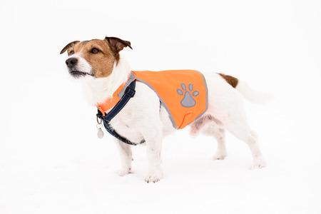 Dog wearing pet safety reflective vest