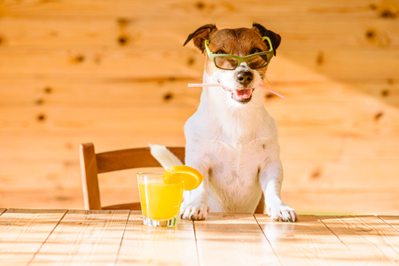 Fun, Vacation and Travel concept - dog in bar Imagens