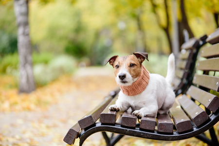 Pet dog off leash on bench in fall park