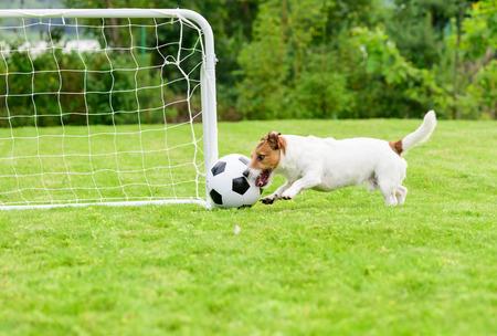Forward scoring header goal into football (soccer) goal