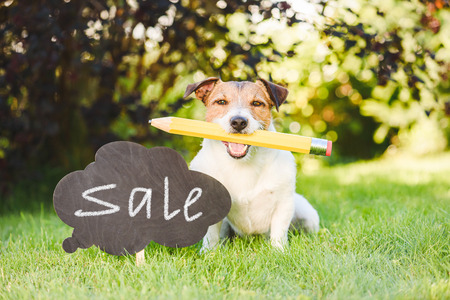 Back to school sale concept with dog holding big pencil
