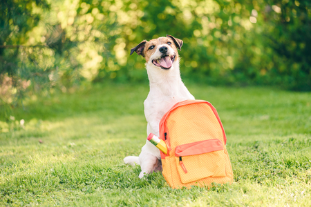 Welcome back to school concept with dog