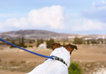 Dog looking at typical Cyprus view Imagens