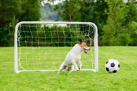 Goalkeeper catches football ball