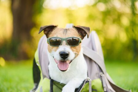 Dog wearing sunglasses coming out pet carrier bag
