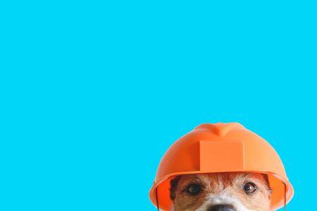 Safety, construction, DIY concept - cute dog in hard hat