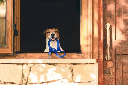 Dog in window of cottage holding leash in mouth Фото со стока