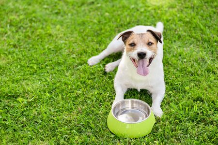 Dog drinking water from doggy bowl cooling down