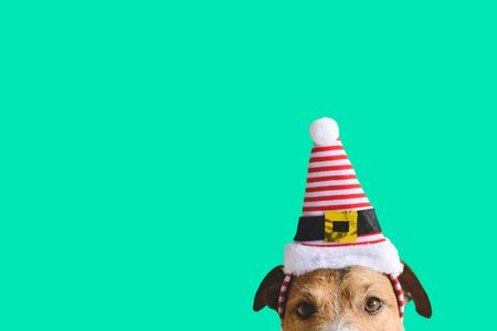 Christmas and New Year holidays concept with dog