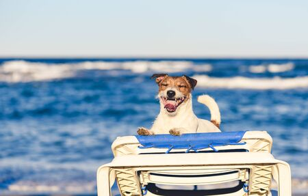 Summer vacation holiday concept with happy dog