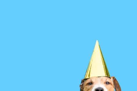Birthday and celebrations concept with dog Imagens