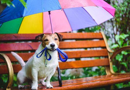 Dog sitting under umbrella with leash